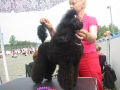 Casimiro Maddox BOB-puppy in Raisio show
