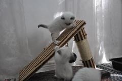 4 vko - leikkihetki