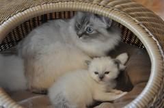 mamma ja sininen 3vko-1