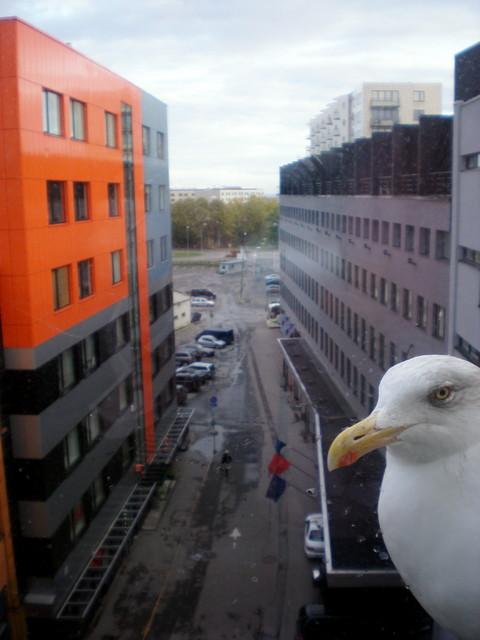 Hotellin näkymä..ja oma stalkkerimme ;)..