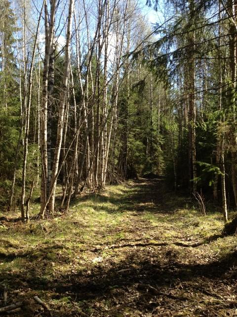 Metsäpolkuja vaihtelevilla pohjilla