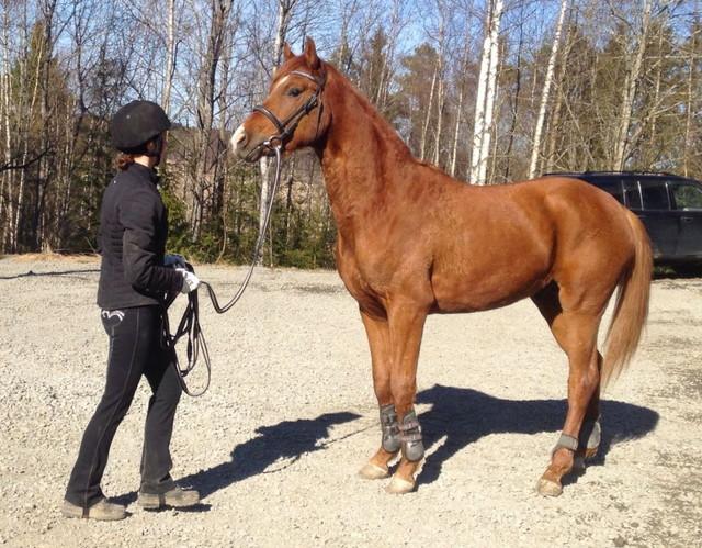 Scarlatti Adams:n kanssa Kyvyt Esiin -karsinnoissa Ypäjällä 10.4.2014