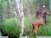 moose110817