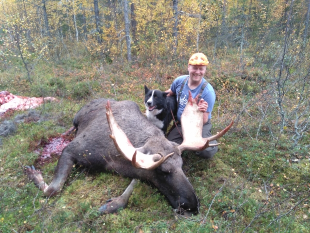Eemil and bull elk