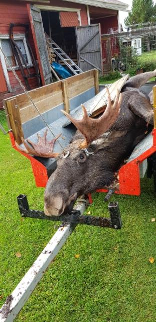 20180916.moose