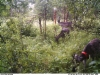 reindeers190719
