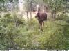 moose020819