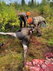 20210907_moose_twist