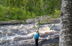 Kids fly fishing, Lapland