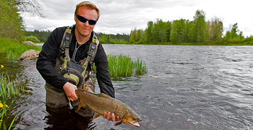 brown_trout_enontekio_lapland.jpg