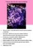 nukenkaulus_brachyscome_iberidifolia