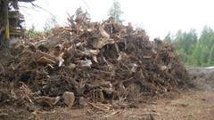 Metsävarastointi