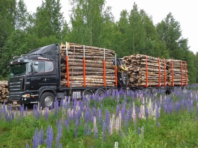 Sampan Scania kuitukuormassa. Autossa Exte 144 ja vaunussa Terminatorit (6kpl).