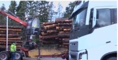 Kuva Skogforskin videosta.
