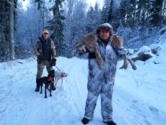 Kimmo Alakosken kuuden seuran yhteisjahdissa haulikolla ampuman ilveksen ajoi hollille Kari Kauhasen Amerikankettukoira ja Plottinajokoira