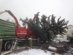 Eschlböck Biber 92 hakkuriin voi syöttää hieman isompiakin joulukuusia....