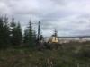 Puistometsäpalvelu Oldenburgin Ponsse Ergo kaatamassa puita Seepsulan Senkkerin kiviainestehtaan alueella Tuusulassa