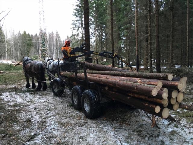 Åfeltin työhevoset voittivat viime vuonna vetomestaruuden SM kisat