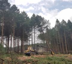 Etelä-Afrikassa korjataan puuta melkein 20 miljoonaa mottia vuodessa.  Järeä ja väkevä Ponsse Bear on omimmillaan päätehakkuulla - myös Afrikan metsissä.