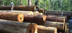 Isoa puuta Romaniassa