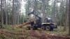 Demo Forest 2017 Belgia - pihtipankolla varustettu PONSSE Buffalo on varsin suosittu yhdistelmä Belgiassa
