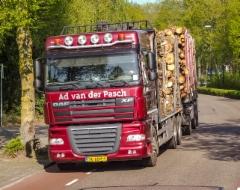 DAF XF täysperävaunuyhdistelmänä puunajossa Hollannissa