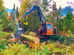 AFM 65 -harvesteripää ja amerikkalaista valmistusta oleva Barko 240 alustakone on suosittu tehopaketti etelä Québecin metsissä