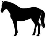 hevonen_seisova