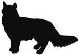 kissa_puolipitkakarva