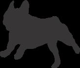 ranskanbulldog_juoksee_annan