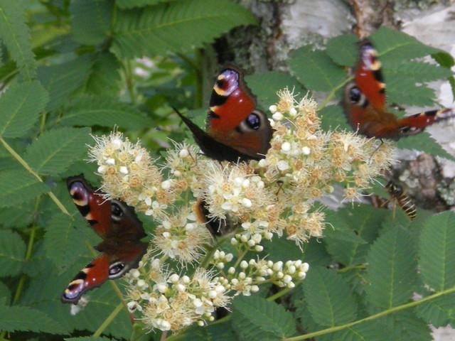 perhoset 2010