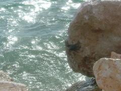 curacao 2008 sek� muita otoksia 002