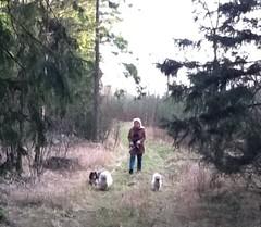 Vi gör dagligen flera skogspromenader Teemme päivittäin useita metsälenkkejä