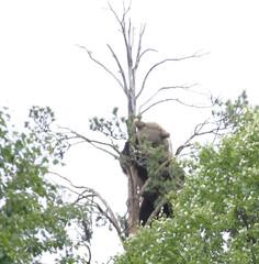 puussa2