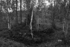 Metsä kuin elävä taideteos