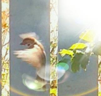 Bird has flown