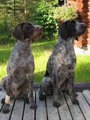 Bertta ja Hertta