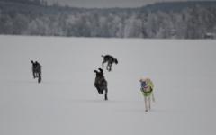 hertta_ja_kumppanit
