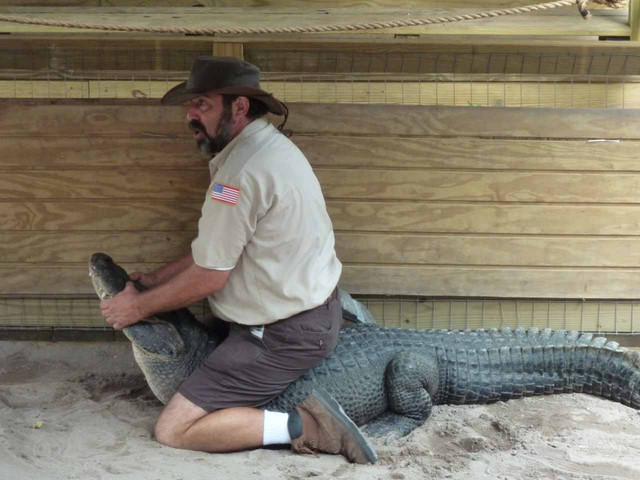 Alligaattorikuiskaaja