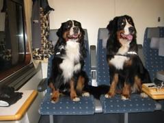 pojat junassa