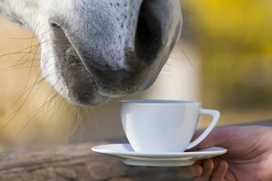 bigstock-teatime--horse-is-smelling-a--47700187.jpg