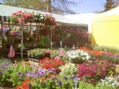 Kukkaisloistoa