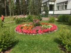 Kotkaniemen kauniit kukat