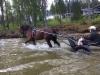Plisetska Birdland 280617 Hollola (c) Utala Racing