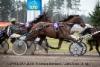 Plisetska Birdland / Juha Utala 2018-04-29 (c) Seppo Toivari