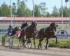 Plisetska Birdland 2.6.2018 Porissa (c) Teemu Saari