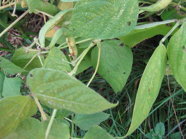 pensaspavun loppusatoa syyskuussa