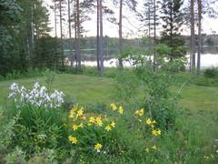paratiisi- ja keltaliljat kesalla_2011