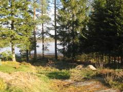 metsaviikko_17.10.14_003