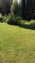 Pensaat nurmikoien reunoilla